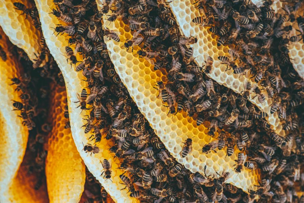 Bijenwasdoeken zijn duurzaam